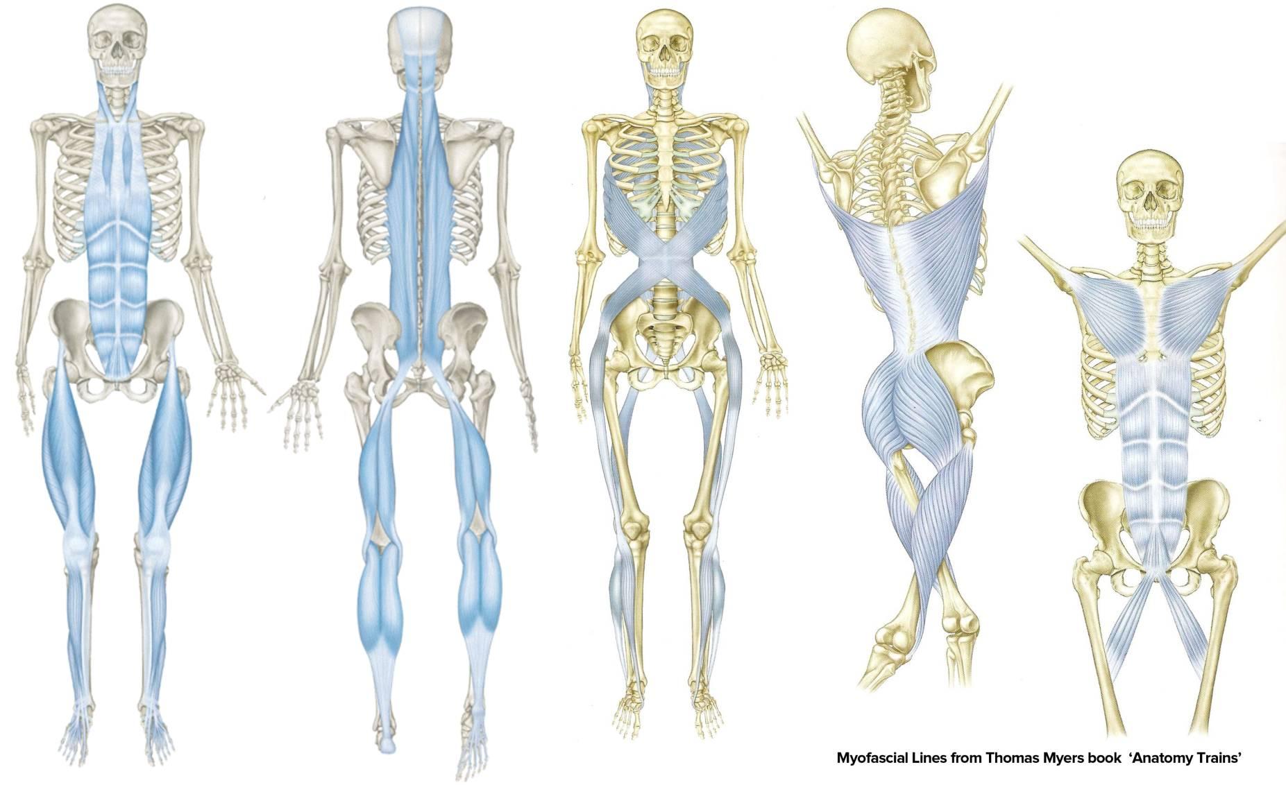 Fascia Formacion Pilates